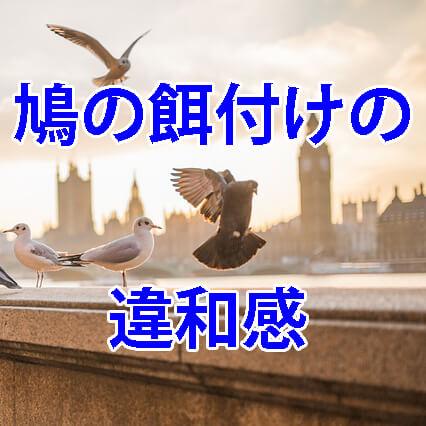 鳩の餌付けへの違和感
